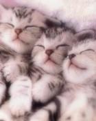 Baby Kittiens.jpg