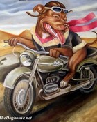 pitbull-motorcycle.jpg