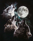 Wolves and moon
