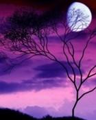 Moon Behind Tree