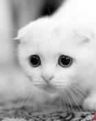 cute-animals-14.jpg
