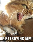 Stop Betraying Me! - greatest freakout ever cat