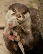 Mom Otter Shows Off New Baby