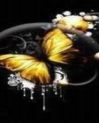 Yellow Butterfly.jpg