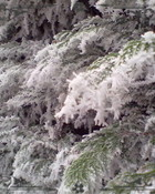 Winters scene #2..jpg