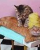 Cat massage.jpg