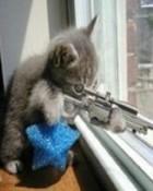 Cat-rifle..jpg