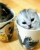 Kittens in cups.jpg