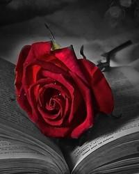 red_rose-wallpaper-10071278(1).jpg