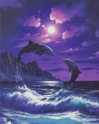 Night Time Dolphins.jpg