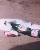 Pissed kitty.jpg