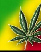 Red, Yellow and Green   (Marijuana Weed).JPG