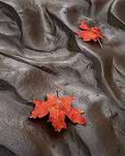 Maple Leaves, Mud, Zion