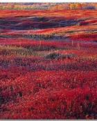 Sunrise and Autumn Blueberries, 1994