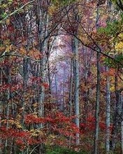 Free Glowing Autumn Forest, Virginia 2000 phone wallpaper by miathyria