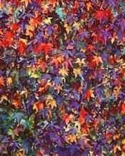 Free Sweetgum Stars, Virginia 1998 phone wallpaper by miathyria