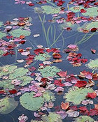 Maple Leaves, Lily Pads, Long Pond, Maine