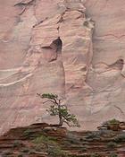 Pines, Emerging Arch, Kolob Canyon