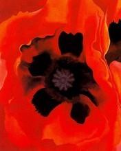Free Oriental Poppies phone wallpaper by miathyria