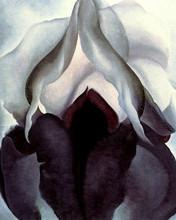 Free Black Iris II phone wallpaper by miathyria