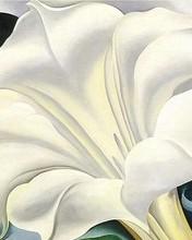 Free White Trumpet Flower phone wallpaper by miathyria
