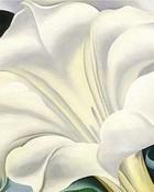 White Trumpet Flower