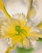 An Orchid wallpaper 1