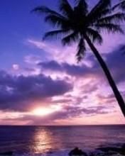 Free purplepalm.jpg phone wallpaper by cj123456