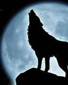 wolfzy.jpg