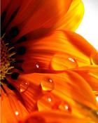 Wavering Flower.jpg