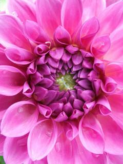 Free Pink Flower phone wallpaper by slatka1