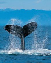 Free Whale phone wallpaper by pinkpolkadotz339
