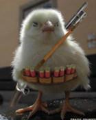 funny chicken war wallpaper 1