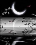 Beautiful_Night.jpg