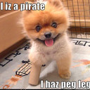 Free cute-puppy-pictures-peg-leg-pirate.jpg phone wallpaper by smurfette2me