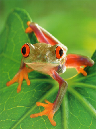 Free frog.jpg phone wallpaper by tyler5180
