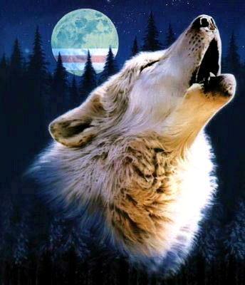 Free wolf.jpg phone wallpaper by xxlanaxx