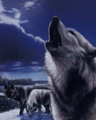 Howling-Wolves