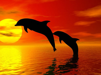 Free dolphin-picture-3b.jpg phone wallpaper by smurfybish