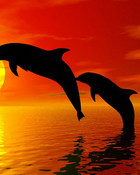 dolphin-picture-3b.jpg wallpaper 1