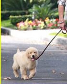 nick-jonas-puppy-love.jpg wallpaper 1