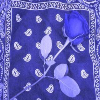 Free blue roseandrag.jpg phone wallpaper by lokita707