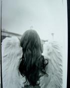 wings-1.jpg