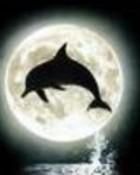 animals_dolphin-moon.jpg