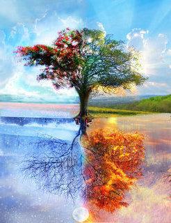 Free tree.jpg phone wallpaper by a2266