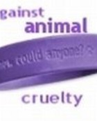 animal-1.jpg