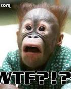 wtf-monkey.jpg
