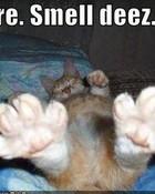 CAT TOES.jpg
