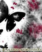 Butterfly-2.jpg wallpaper 1