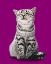 Free Whiskas - Affection.jpg phone wallpaper by ptwm68